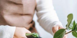 Green Garden Designer